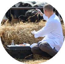 Vacunas para ganado bovino INTERCHEMBIO