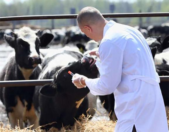 Vacuna para ganado interchembio